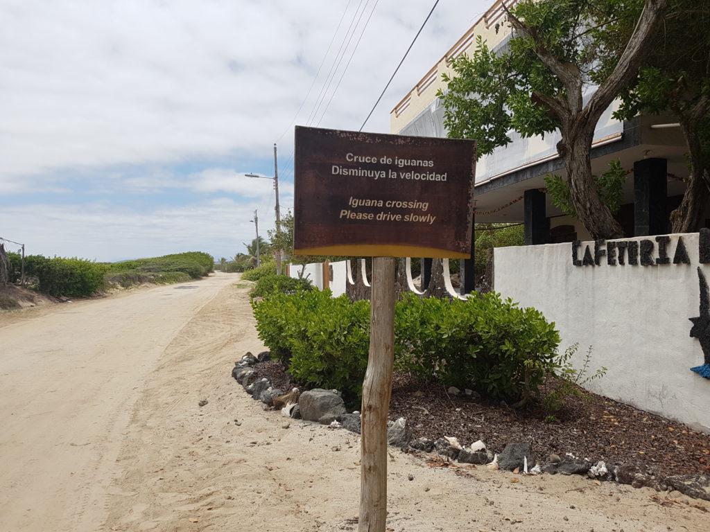 Cruce de iguanas - osobliwe skrzyżowanie na Isabeli