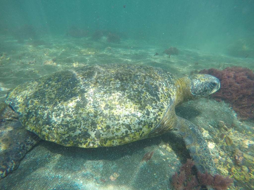 Snorkeling na Los Túneles - jesteśmy naprawdę blisko morskiej fauny