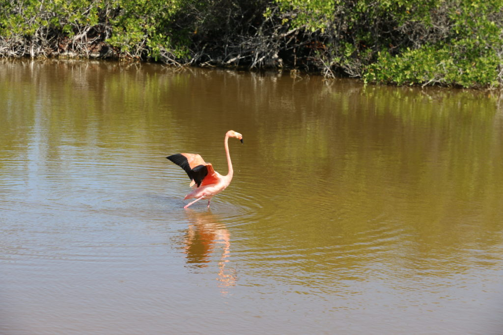 W drodze do centrum żółwi spotykamy flamingi