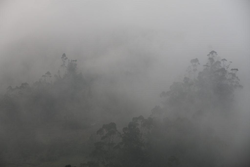Chyba nie ma wątpliwości, czemu ta formacja roślinna jest nazywana lasem mglistym